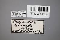 Dasymutilla vesta image