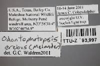 Odontophotopsis erebus image